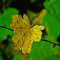 Leaf Caught On A Branch by Jeff Swan