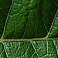 Leaf Close Up by Agustin Uzarraga