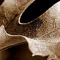 Leaf Collage 3 by Lauren Radke