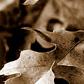 Leaf Collage 4 by Lauren Radke
