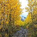 Leaf Covered Rocky Road by Mitch Johanson