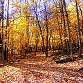 Leaf Covered Trail by Mark Hudon