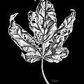 Leaf by David Fedan