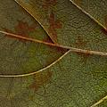 Leaf Design I by Ben and Raisa Gertsberg