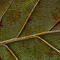 Leaf Design II by Ben and Raisa Gertsberg