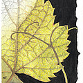 Leaf by Elena Yakubovich
