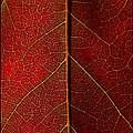 Leaf by Gene Tatroe