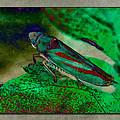 Leaf Hopper by WB Johnston