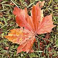 Leaf by Les Cunliffe