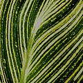Leaf Lines by LeeAnn McLaneGoetz McLaneGoetzStudioLLCcom
