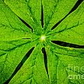 Leaf Macro by Grace Grogan