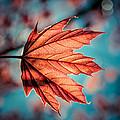 Leaf Of Light by David McCandless