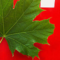 Leaf On Sign by Catherine Ratliff
