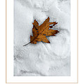 Leaf On Snow Poster by Mike Nellums