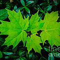 Leaf Overlay by Grace Grogan