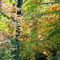 Leaf Path  by Rebecca Reed