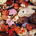 Leaf Patterns 2 by Rodney Lee Williams