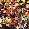 Leaf Patterns 3 by Rodney Lee Williams