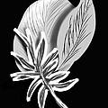 Leaf Ray by Christine Fournier