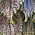 Leaf Series 15 by Paddy Shaffer