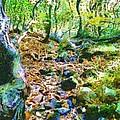 Leaf Stream by Derek Gedney