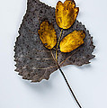 Leaf Study by Michael Arend