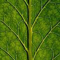 Leaf by TouTouke A Y