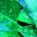 Leafish by Beth Hedgpeth
