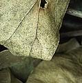 Leafpile 2 by David Weeks