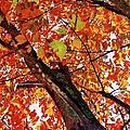 Leafward by Daniel Thompson