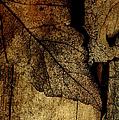 Leafwood by David Weeks