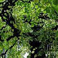 Leafy Heaven 2 by Rachael Shaw