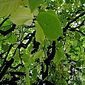 Leafy Heaven 3 by Rachael Shaw