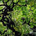 Leafy Heaven by Rachael Shaw