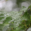 Leafy Raindrops by Jennifer E Doll