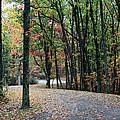 Leafy Trail by Philip Hartnett
