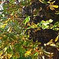 Leafy Tree Bark Image by Joan-Violet Stretch