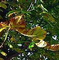 Leafy Tree Image by Joan-Violet Stretch