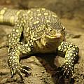 Leapin Lizards by John Telfer