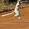 Leaping Lemur by Michele Burgess
