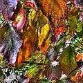Leaves 1 by Jamie  Franks