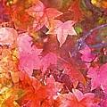 Leaves 6 by Pamela Cooper