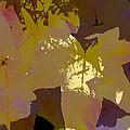 Leaves 9 by Pamela Cooper