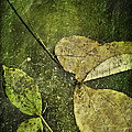 Leaves Afloat by Melissa Smith