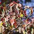 Leaves And Berries by Renee Friedel
