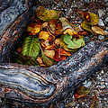 Leaves And Root by Robert Woodward