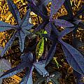 Leaves by Angus Hooper Iii