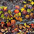 Leaves At The Levee by Susie Loechler