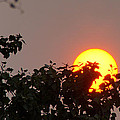 Leaves Cradling Setting Sun by Mick Anderson