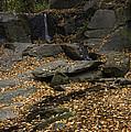 Leaves by David Waldrop